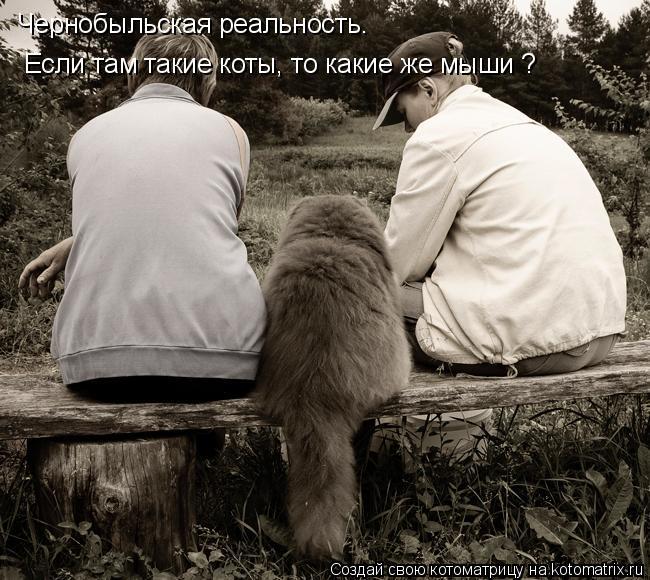 Котоматрица: Чернобыльская реальность.  Если там такие коты, то какие же мыши ?