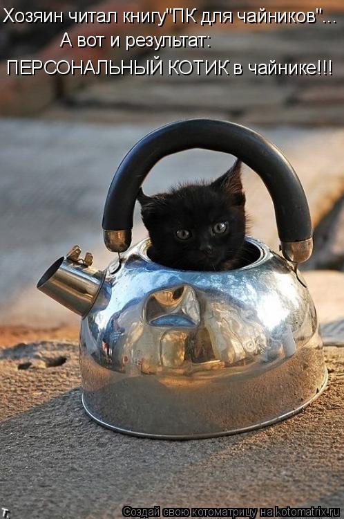 """Котоматрица: Хозяин читал книгу""""ПК для чайников""""... А вот и результат: ПЕРСОНАЛЬНЫЙ КОТИК в чайнике!!!"""
