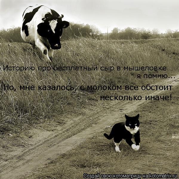 Котоматрица: Историю про бесплатный сыр в мышеловке я помню... Но, мне казалось, с молоком все обстоит  несколько иначе!