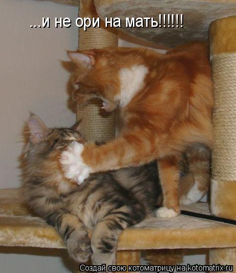 Котоматрица: ...и не ори на мать!!!!!!