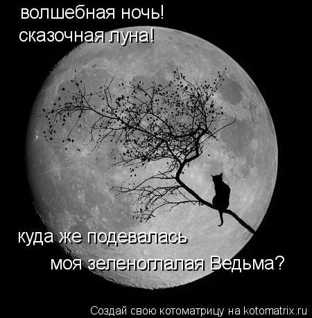 Котоматрица: волшебная ночь! сказочная луна! куда же подевалась  моя зеленоглалая Ведьма?