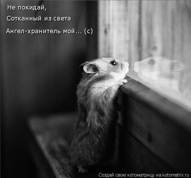 Котоматрица: Не покидай,  Сотканный из света Ангел-хранитель мой... (с)