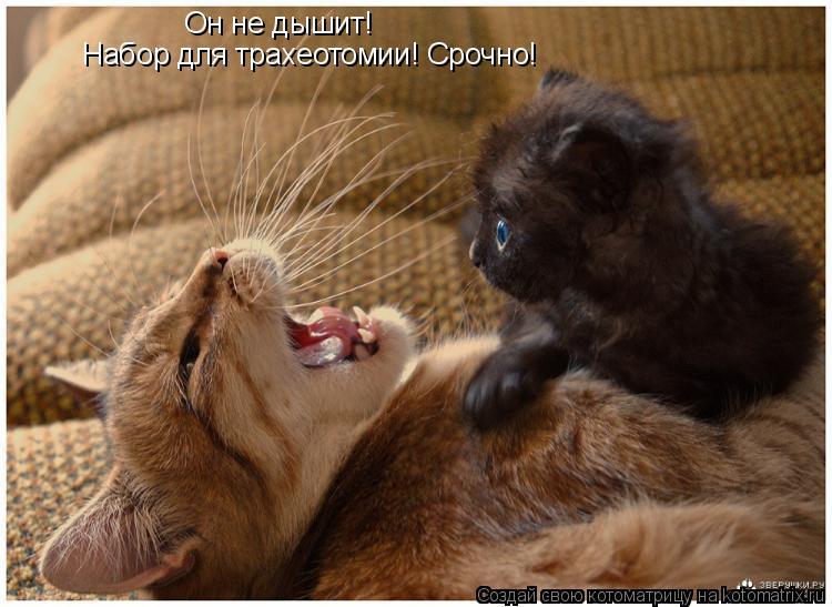 Котоматрица: Он не дышит! Набор для трахеотомии! Срочно!