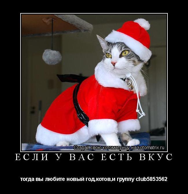 Котоматрица: если у вас есть вкус тогда вы любите новый год,котов,и группу club5853562