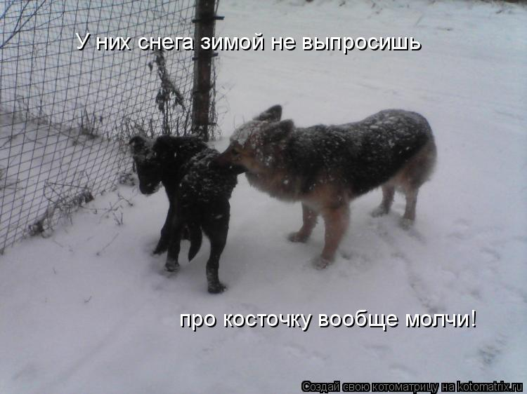 Котоматрица: У них снега зимой не выпросишь про косточку вообще молчи!