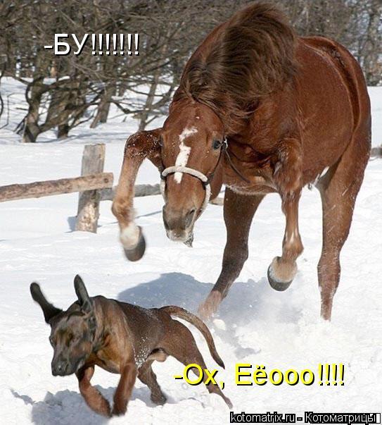 Котоматрица: -БУ!!!!!!! -Ох, Еёооо!!!!