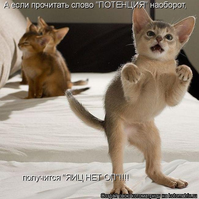 """Котоматрица: А если прочитать слово """"ПОТЕНЦИЯ"""" наоборот, получится """"ЯИЦ НЕТ ОП""""!!!!"""
