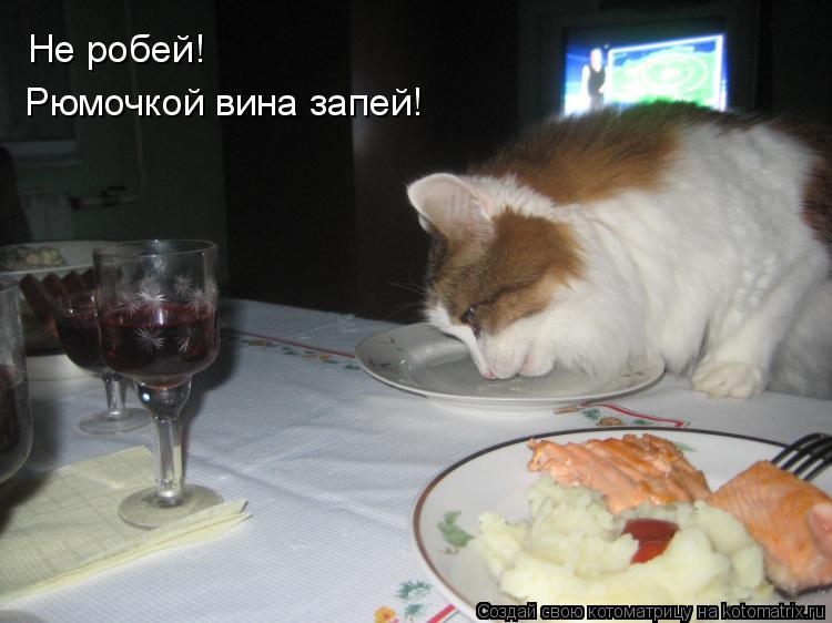 Котоматрица: Не робей! Рюмочкой вина запей!