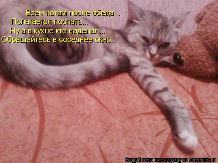 Котоматрица: Всем котам после обеда... Полагается поспать... Ну а в кухне кто наделал... Обращайтесь в соседнее окно..