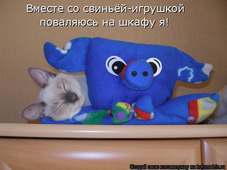 Котоматрица: Вместе со свиньёй-игрушкой поваляюсь на шкафу я!