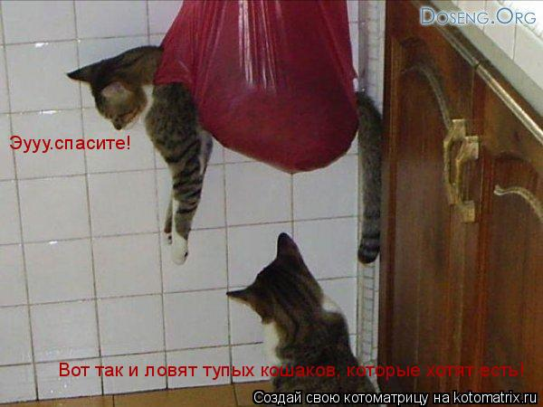 Котоматрица: Вот так и ловят тупых кошаков, которые хотят есть! Эууу.спасите!