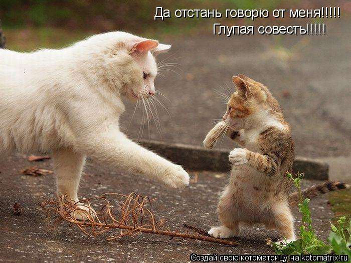 Котоматрица: Да отстань говорю от меня!!!!! Глупая совесть!!!!!