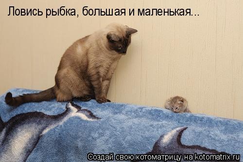 Котоматрица: Ловись рыбка, большая и маленькая...