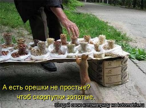 Котоматрица: А есть орешки не простые? чтоб скорлупки золотые.