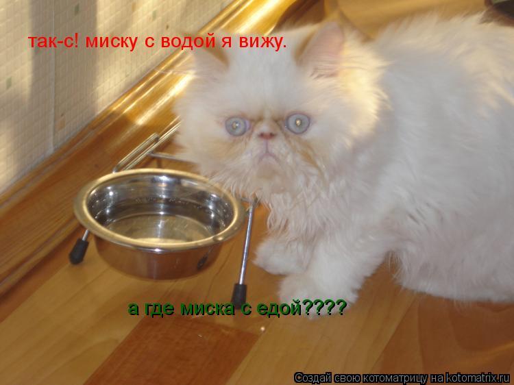 Котоматрица: так-с! миску с водой я вижу. а где миска с едой????