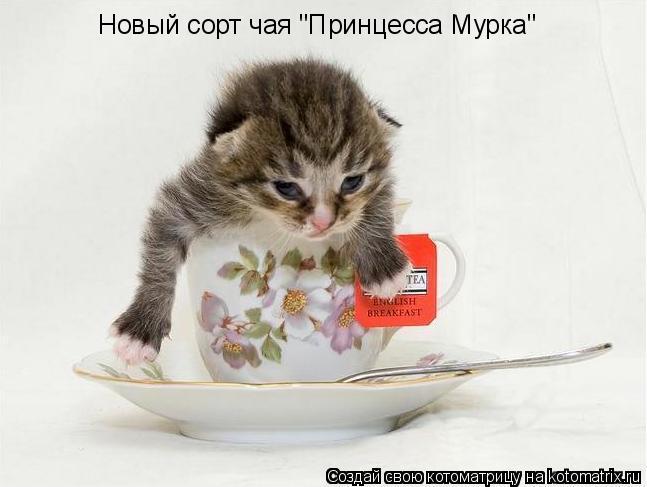 """Котоматрица: Новый сорт чая """"Принцесса Мурка"""""""