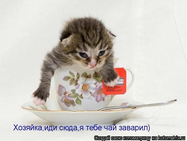 Котоматрица: Хозяйка,иди сюда,я тебе чай заварил)