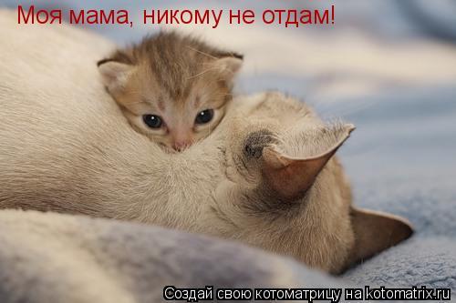 Котоматрица: Моя мама, никому не отдам!