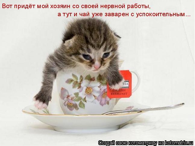 Котоматрица: а тут и чай уже заварен с успокоительным... Вот придёт мой хозяин со своей нервной работы,
