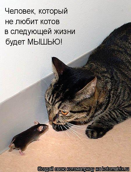 Котоматрица: Человек, который не любит котов в следующей жизни будет МЫШЬЮ!