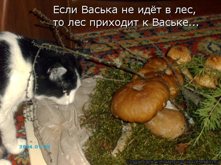 Котоматрица: Если Васька не идёт в лес, то лес приходит к Ваське...