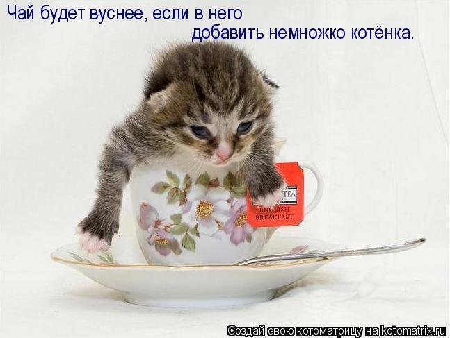 Котоматрица: Чай будет вуснее, если в него  добавить немножко котёнка.