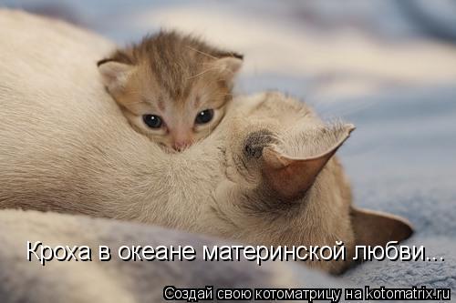 Котоматрица: Кроха в океане материнской любви...