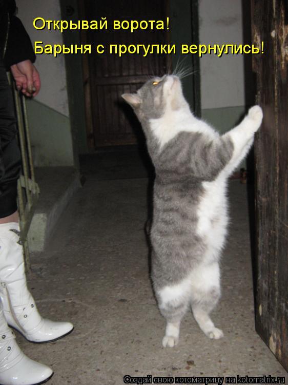 Котоматрица: Открывай ворота! Барыня с прогулки вернулись!
