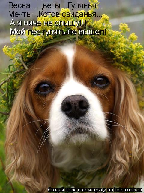 Котоматрица: Весна...Цветы...Гулянья... Мечты...Котов свиданья... А я ниче не слышу!!! Мой пес гулять не вышел!
