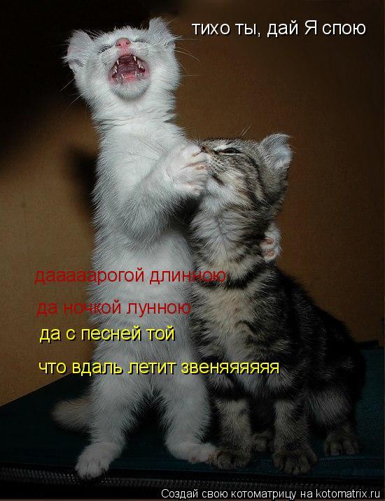 Котоматрица: тихо ты, дай Я спою дааааарогой длинною да ночкой лунною да с песней той что вдаль летит звеняяяяяя
