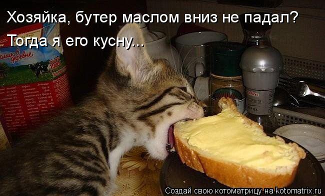 Котоматрица: Хозяйка, бутер маслом вниз не падал? Тогда я его кусну...