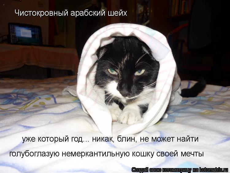 Котоматрица: Чистокровный арабский шейх  уже который год... никак, блин, не может найти  голубоглазую немеркантильную кошку своей мечты