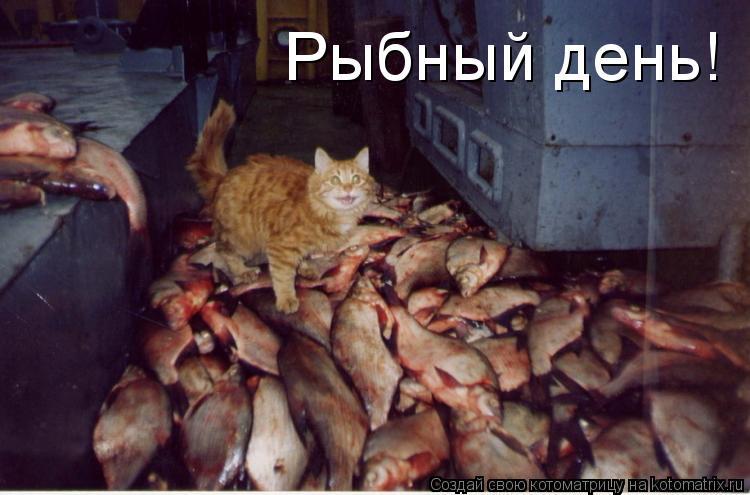 Котоматрица: Рыбный день!