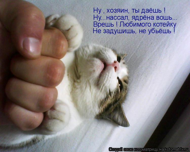 Котоматрица: Ну...нассал, ядрёна вошь... Врешь ! Любимого котейку  Не задушишь, не убьёшь ! Ну , хозяин, ты даёшь !