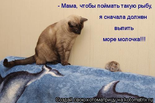 Котоматрица: - Мама, чтобы поймать такую рыбу, я сначала должен  выпить море молочка!!!