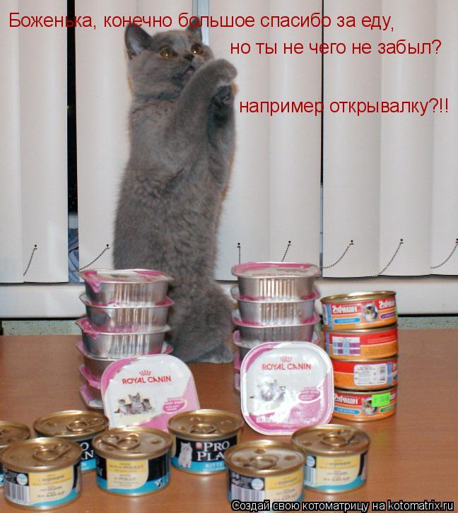 Котоматрица: Боженька, конечно большое спасибо за еду ,  но ты не чего не забыл? например открывалку?!!