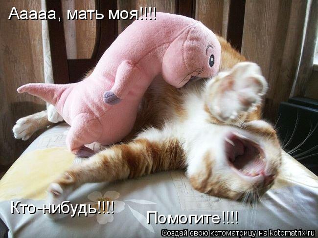 Котоматрица: Ааааа, мать моя!!!! Кто-нибудь!!!! Помогите!!!!