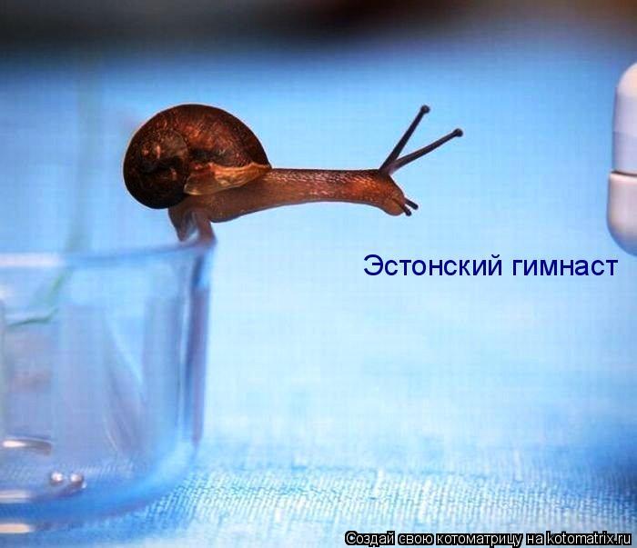 Котоматрица: Эстонский гимнаст
