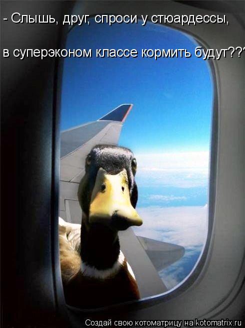 Котоматрица: - Слышь, друг, спроси у стюардессы,  в суперэконом классе кормить будут????