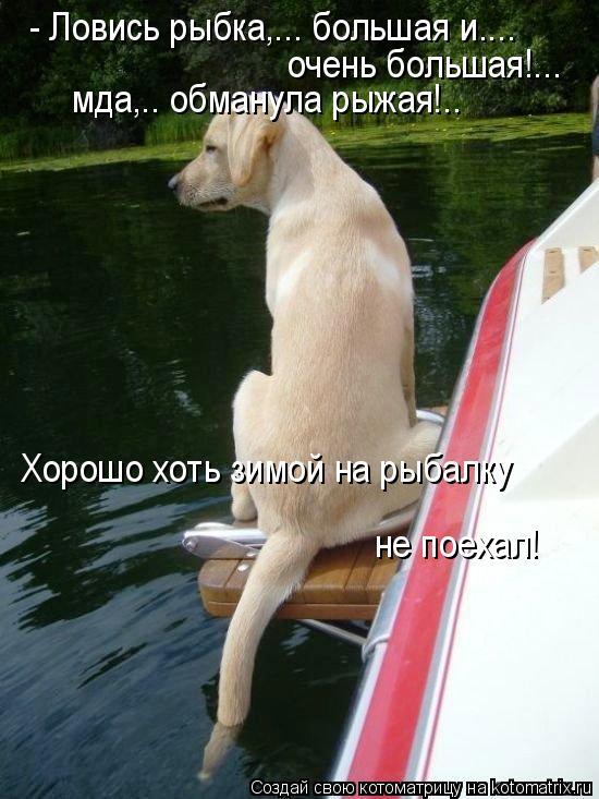 Котоматрица: - Ловись рыбка,... большая и....  очень большая!... мда,.. обманула рыжая!.. Хорошо хоть зимой на рыбалку  не поехал!