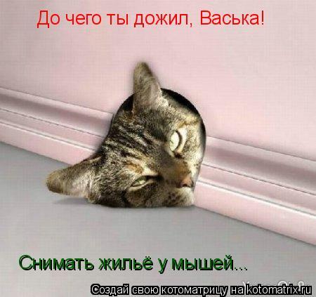 Котоматрица: До чего ты дожил, Васька! Снимать жильё у мышей...