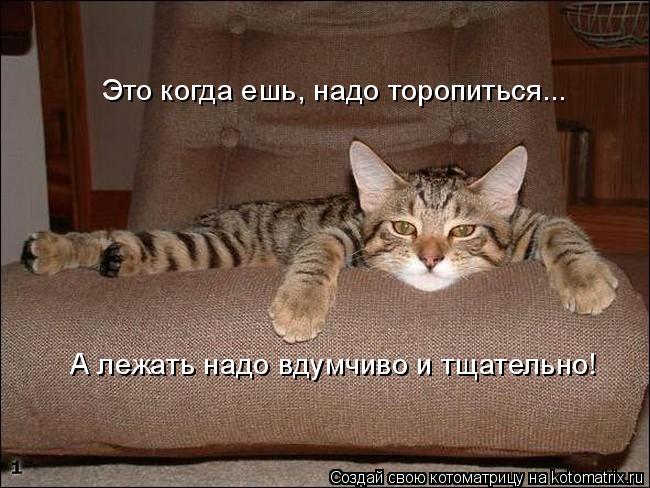 Котоматрица: Это когда ешь, надо торопиться... А лежать надо вдумчиво и тщательно!