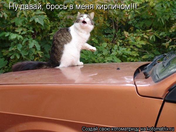 Котоматрица: Ну давай, брось в меня кирпичом!!!