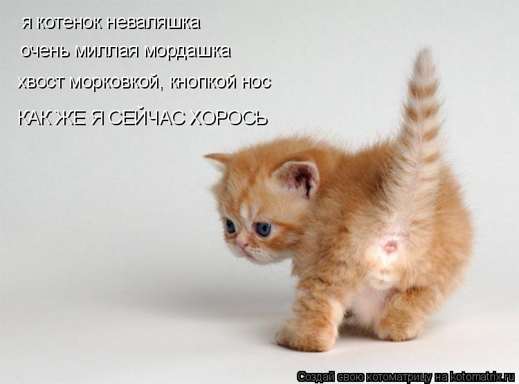 Котоматрица: я котенок неваляшка очень миллая мордашка хвост морковкой, кнопкой нос КАК ЖЕ Я СЕЙЧАС ХОРОСЬ