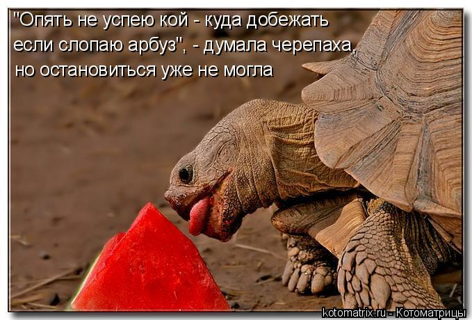"""Котоматрица: но остановиться уже не могла """"Опять не успею кой - куда добежать если слопаю арбуз"""", - думала черепаха,"""