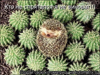 Котоматрица: Кто не спрятался я не виноват!!!