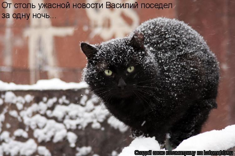 Котоматрица: От столь ужасной новости Василий поседел  за одну ночь...