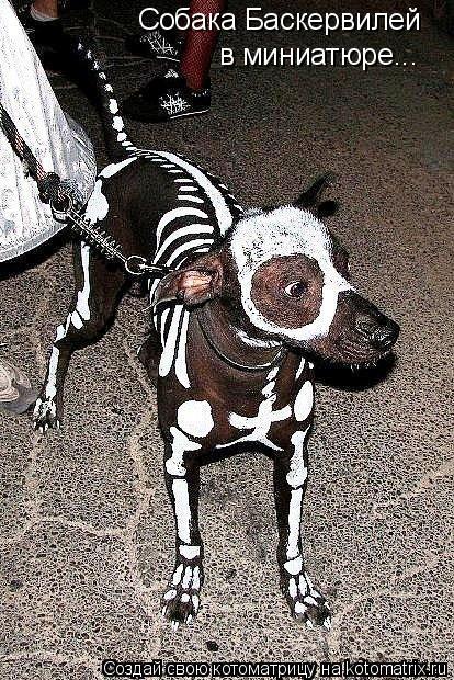 Котоматрица: Собака Баскервилей в миниатюре...