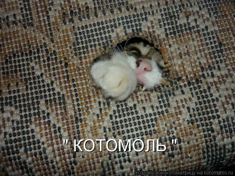 """Котоматрица: """" КОТОМОЛЬ """""""