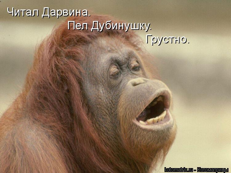 Котоматрица: Читал Дарвина.  Пел Дубинушку. Грустно.